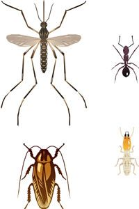 Our handy chart can help you figure this out.  The ant is in the top right and the termite in the bottom right.