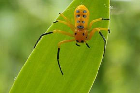 This is one attractive spider. In case you're keeping count, the eighth spot is on its abdomen.
