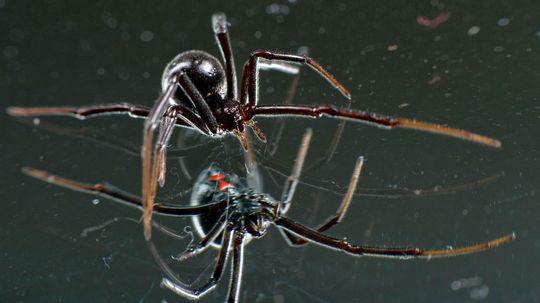 10 Amazing, Beautiful, TERRIFYING Spiders