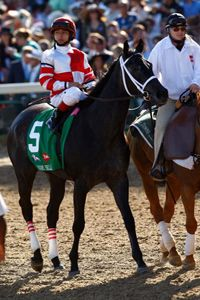 Eight Belles as she is led to the starting gate at the 2008 Kentucky Derby to start the race where she would finish second and suffer two fatal injuries that led to her euthanasia on the track.