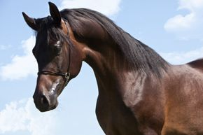 The exact age of this Thoroughbred is unknown, although we can tell you its birthday: January 1.