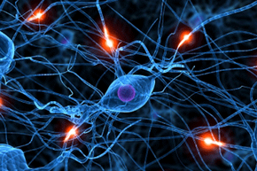 Habits build well-worn synaptic pathways in our brains.