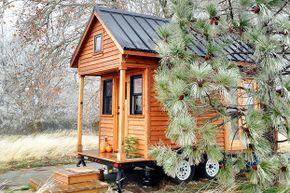 A tiny house sits next to a pine tree.