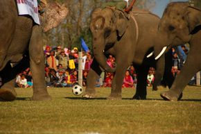 Sauraha also hosts the International Elephant Festival which promotes conservation and gets together local pachyderms for a friendly game of soccer.