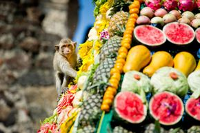Lopburi's long-tailed macaques are treated to an elaborate feast during the annual Monkey Buffet. See more vacation pictures.