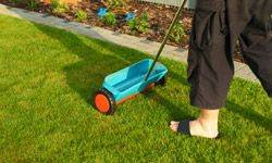 A little compost can feed a beautiful lawn.