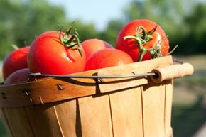 Summer is considered the best season to get tomatoes.