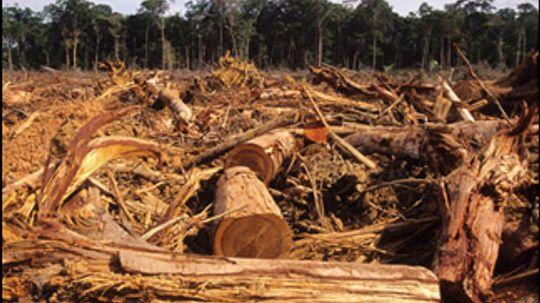 10 Signs of a Modern Mass Extinction