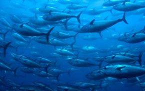 Top 10 Most Endangered Fish Species
