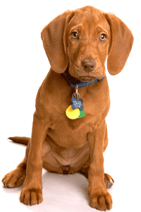 When you travel, make sure your pet's wearing a tag.