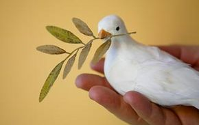 Pigeons have been important symbols in religious writings, but does this make them divine?