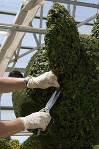 An employee makes adjustments on a topiary in the backstage greenhouse area at Disney World in Orlando, Fla., April 10, 2008.