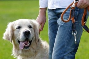 """Sensors could allow dogs to """"tell"""" us all kinds of things."""