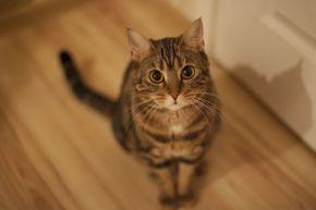 OK, I'm sitting. Where's my treat?