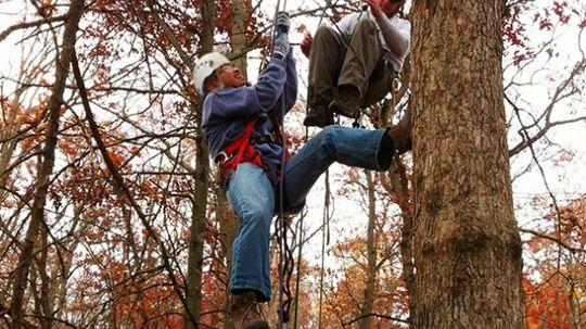 How Tree Climbing Works