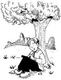 Adopt a tree to study.