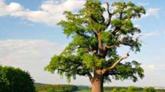 When is tree allergy season?