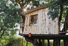 Tree houses are classic kid hideouts, but they're regaining popularity with adults as well. See more pictures of trees.