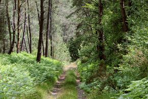 Forests, like this one in France, cover 30 percent of the Earth. See more pictures of trees.