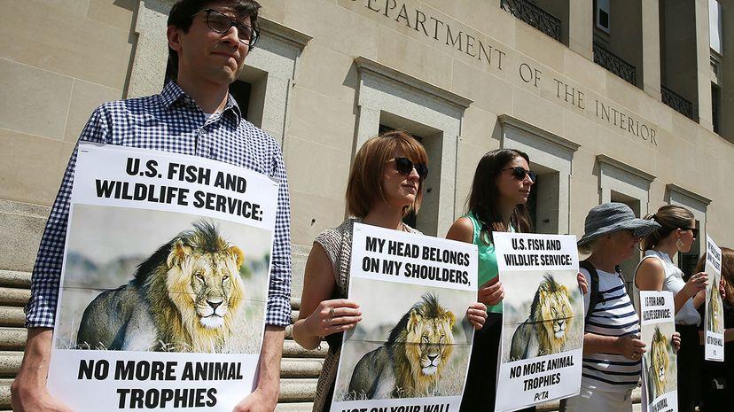 big game hunting protests