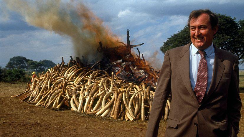 ivory bonfire
