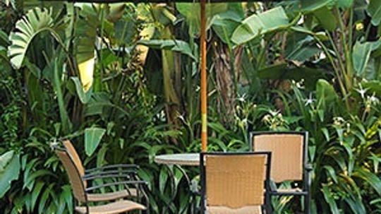 5 Tips for Creating a Tropical Backyard