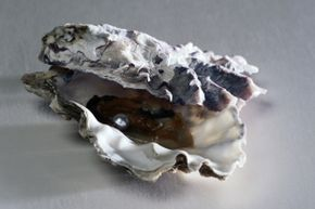 Not entirely sure how oysters form? Neither were early natural philosophers who thought, under the guise of spontaneous generation, that the seafloor could just spawn them.