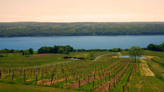 Ultimate Guide to New York Wine Country