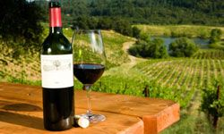 Wine country vacations are great for everyone. You don't even have to like wine (but it helps).