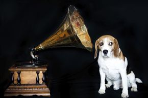 As far as we know, Edison did not dabble in phonographs for dogs. Dolls, yes. Dogs, no.