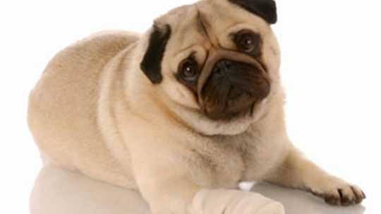 Home Remedies for Dogs With Sore Paws and Sunburn