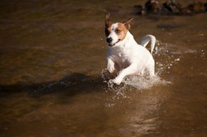 Dogs, especially those with white fur, can get sunburned.