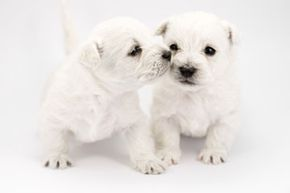 Could these cute little puppies have worms?