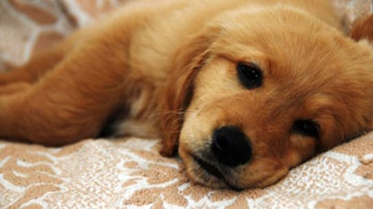 How to Nurse an Ailing Dog