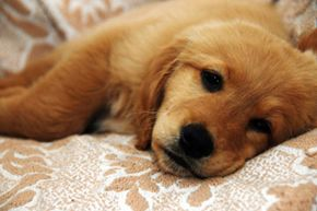 Having a sick dog is no fun, but our tips can help get him on the fast track to recovery.