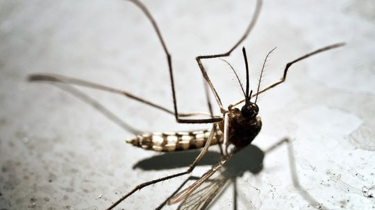 What if mosquitoes went extinct?