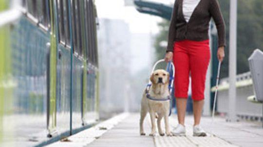 U.S. Pet Travel Laws Guide