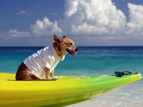 Does your pooch kayak?Then, bring him along. See more pet pictures.