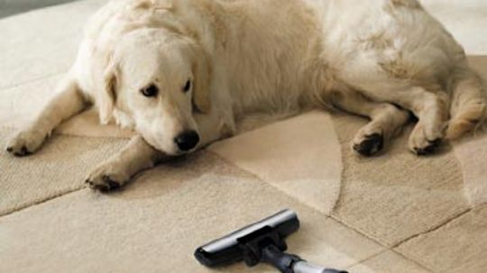 What type of vacuum cleaner works best for pet hair?