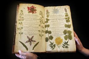 This rare 18th century book on botany is on display at the Herbarium library of London's Royal Botanic Gardens.