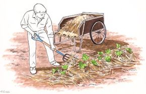 Organic mulches can overwhelm seedlings if the layer is too thick.