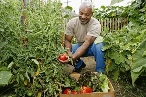 Backyard vegetable gardens do not count as farms.