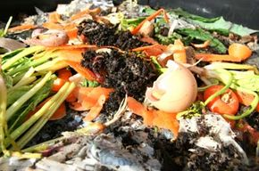 Worms love to munch through your leftover organic waste. Just remember to watch out for the foods that can harm them.
