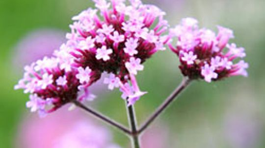 Top 5 Perennials in the Southeast