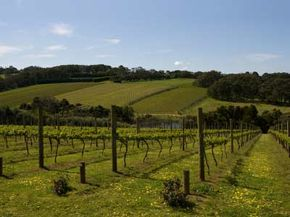 Australia's Victoria is home to many popular wine regions. See more wine pictures.