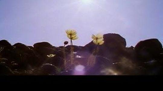 """5个植物摄影技巧""""border="""