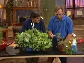 """Get expert advice on how to maintain and take care of indoor plants on Discovery Channel's """"Gimme Shelter."""""""