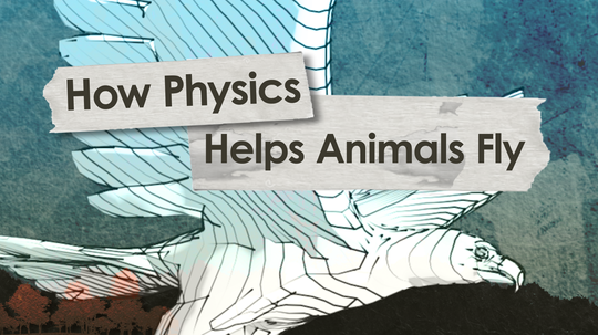 HowStuffWorks Illustrated: How Physics Helps Animals Fly