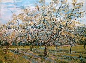 Vincent van Gogh's The White Orchard is an oil on                              canvas (23-1/2x32 inches) that is housed in                                            the Van Gogh Museum in Amsterdam.