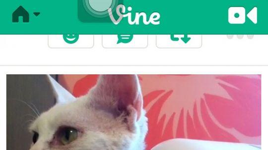 How Vine Works